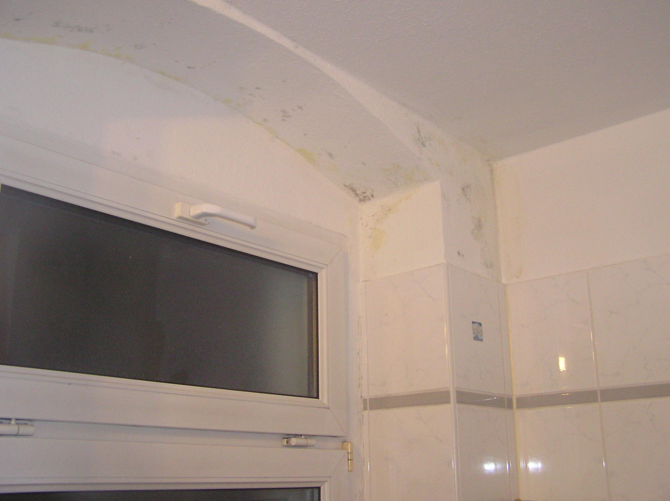 schimmelpilzbefall bauwerksanalyse dresden elektrosmog messung. Black Bedroom Furniture Sets. Home Design Ideas
